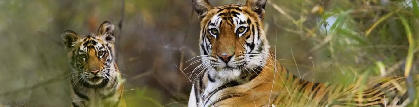 Chilla Rajaji National Park Tour Package From Haridwar